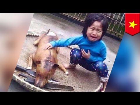Anjing hilang seorang anak ditemukan telah dimasak dan dijual - TomoNews