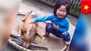 Download Video Anjing hilang seorang anak ditemukan telah dimasak dan dijual - TomoNews MP3 3GP MP4