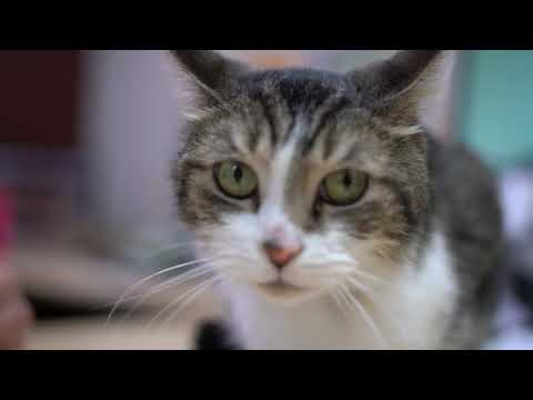 Cats Cradle Shelter: Adopt, Don't Shop