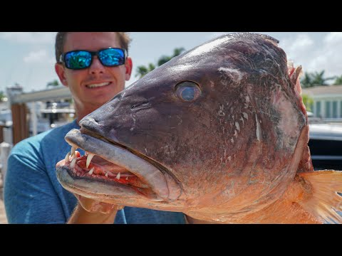 GIANT Fish Head Soup! Clean & Cook (Cubera Snapper Jaw Mount)