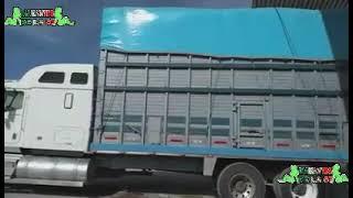 Dina international vs Kenworth camiones torton perrones