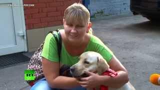 Собаку-поводыря вернули слепой девушке