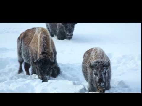 Yellowstone and Two Tops Trail Snowmobile Trip 2016