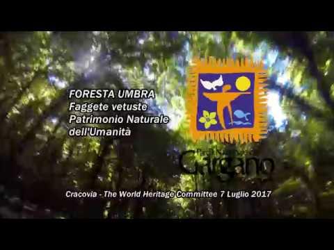 Foresta Umbra, le faggete secolari diventano Patrimonio UNESCO