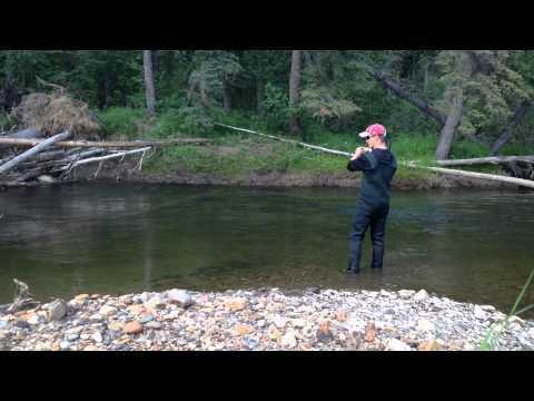 Chena River Fairbanks Alaska Grayling