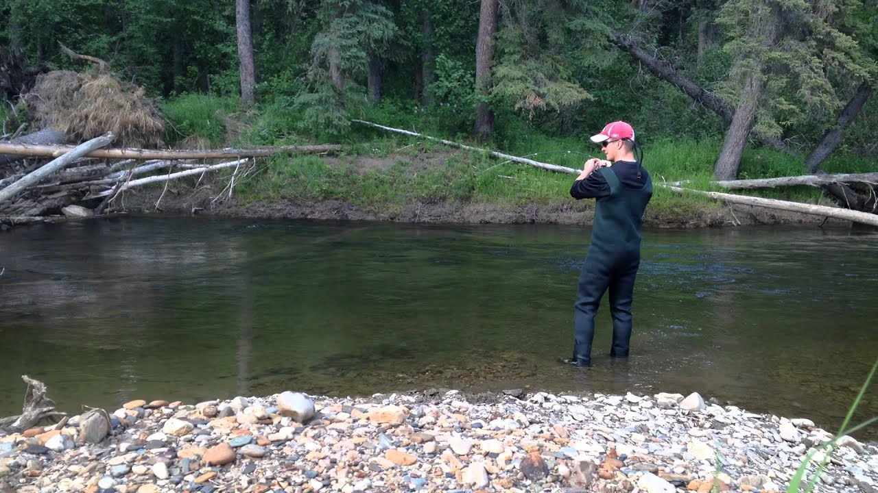 Chena river fairbanks alaska grayling youtube for Alaska out of state fishing license