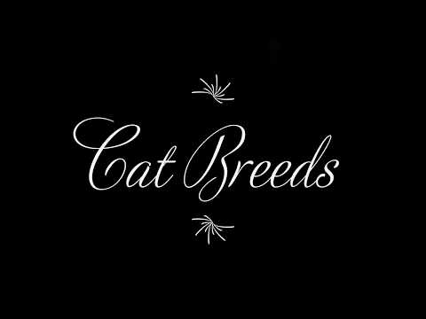 5 Cat Breeds (Russian Blue, Persian Cat, Scottish Fold, Siamese Cat, and Maine Coon)