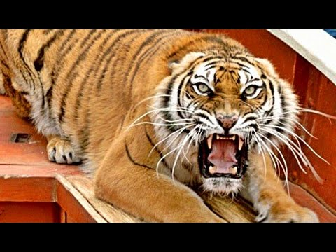 LIFE OF PI - SCHIFFBRUCH MIT TIGER | Trailer & Filmclips [HD]