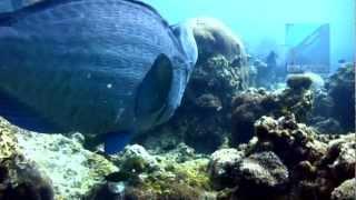 Diving D'Lagoon, Perhentian Islands, Malaysia