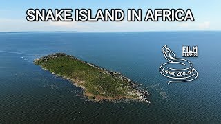 Snake island in Africa - Musambwa island with deadly Forest cobras