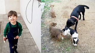 Gambar cover Bilge Kağan Bütün Köpeklerimizi ve Kedilerimizi Tanıtıyor