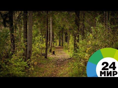 Охрана леса: в Армении ряды рейнджеров пополнили девушки - МИР 24
