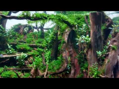 Nano Forest Aquascape Timelaps Development Youtube
