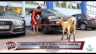 WOWBIZ (20.09.2017) - Andreea Mantea a primit cadou de la Bianca o CAPRA! Partea I