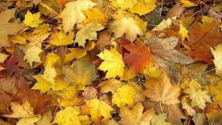 OST Autumn in My Heart - How Much I Can Do