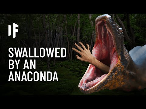What If You Were Swallowed by an Anaconda?