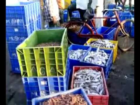 Harne Bandar fish market - Auction, lilav, boli kagao fresh fish Paao.- 655 Views