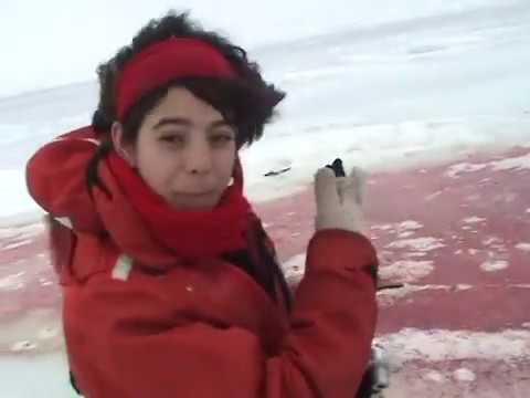 Canadian Seal Hunt Arrests