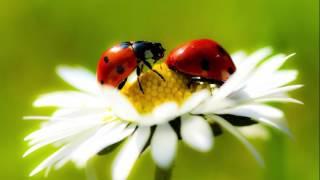 Разнообразие природы родного края
