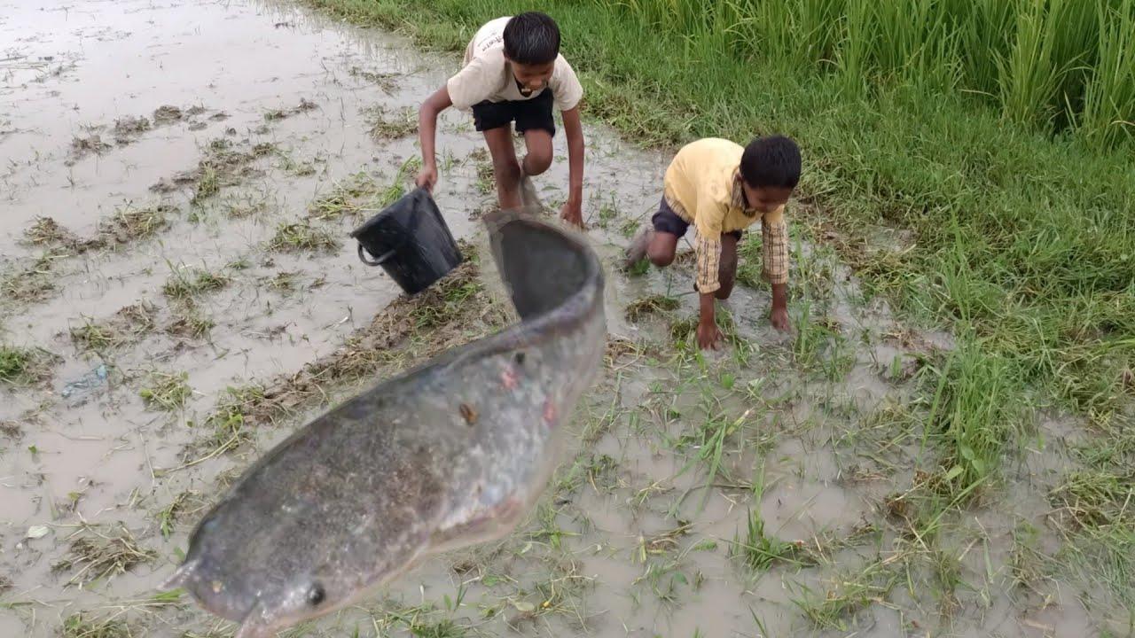 Amazing Boy Catching Big Catfish By Hand - Hand Fishing For Catfish