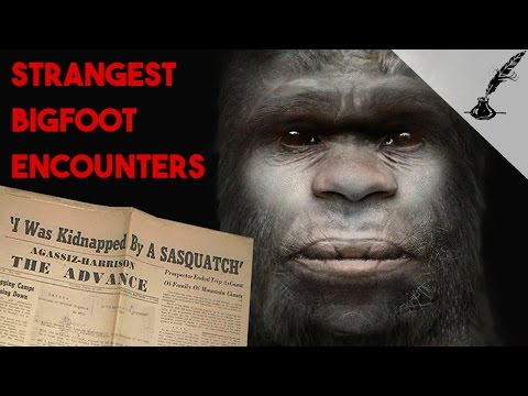 5 Strangest Bigfoot Encounters in History