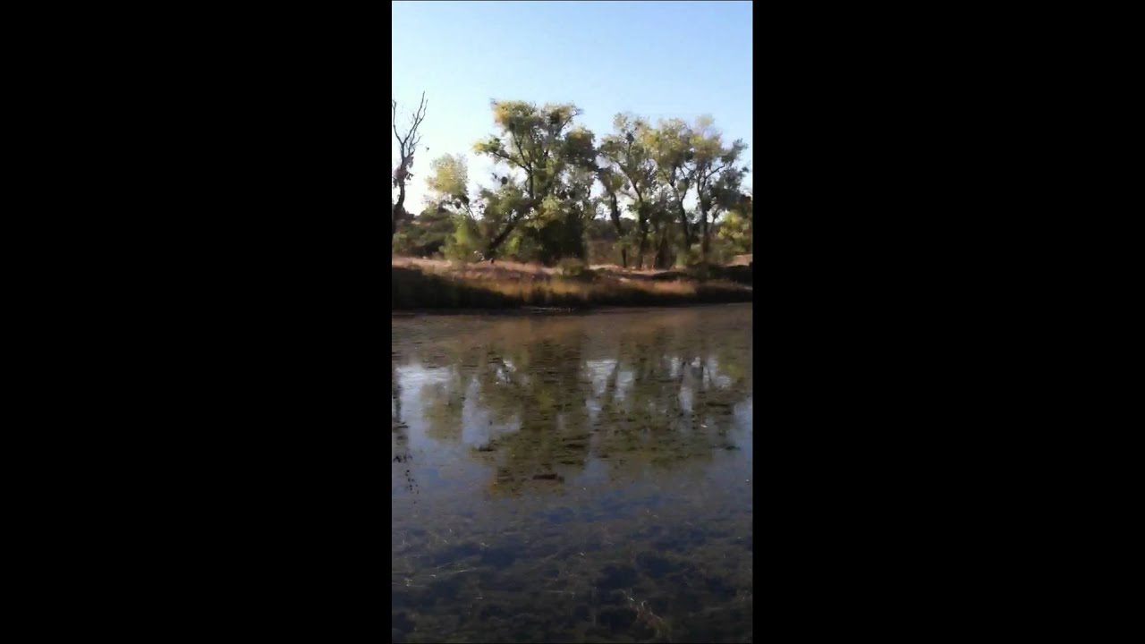 11th fish half pound blue gill mississippi bar lake natoma for Lake natoma fishing