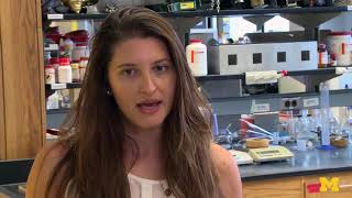 Engaged Michigan: Summer programs expand undergraduate research opportunities