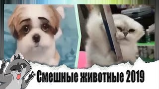 Смешные животные 2019 / Подборка лучших приколов с котами  под музыку / ПОПРОБУЙ НЕ ЗАСМЕЯТЬСЯ