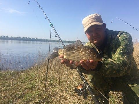 #20 Ловля Карася на Донку с Кормушкой Рыбалка с Берега на Большой Реке Голавль