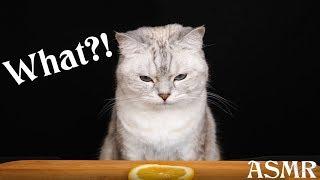 АСМР Котэ Дегустатор 😻🍋🍗 ASMR Cat Reviewing Different Food 🐾🐈🍉