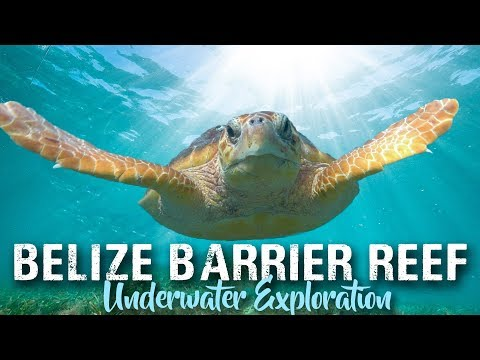 SCUBA DIVING BELIZE | Ambergris Caye And Placencia | Travel Vlog 2019