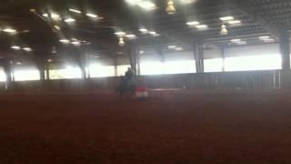  Barrel horse for sale