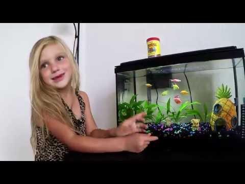 Aquarium Яркие Цветные рыбки в моем аквариуме!!!