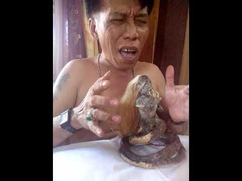 Hasil penangkapan ular berkepala manusia sul-sel gowa oleh udin wawi