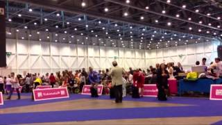 Eds 2013, Rec Show In Geneva/  Miniature Poodle, Best Of Breed