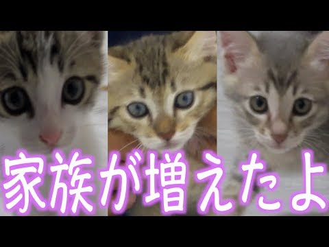 子猫の名前を募集します!