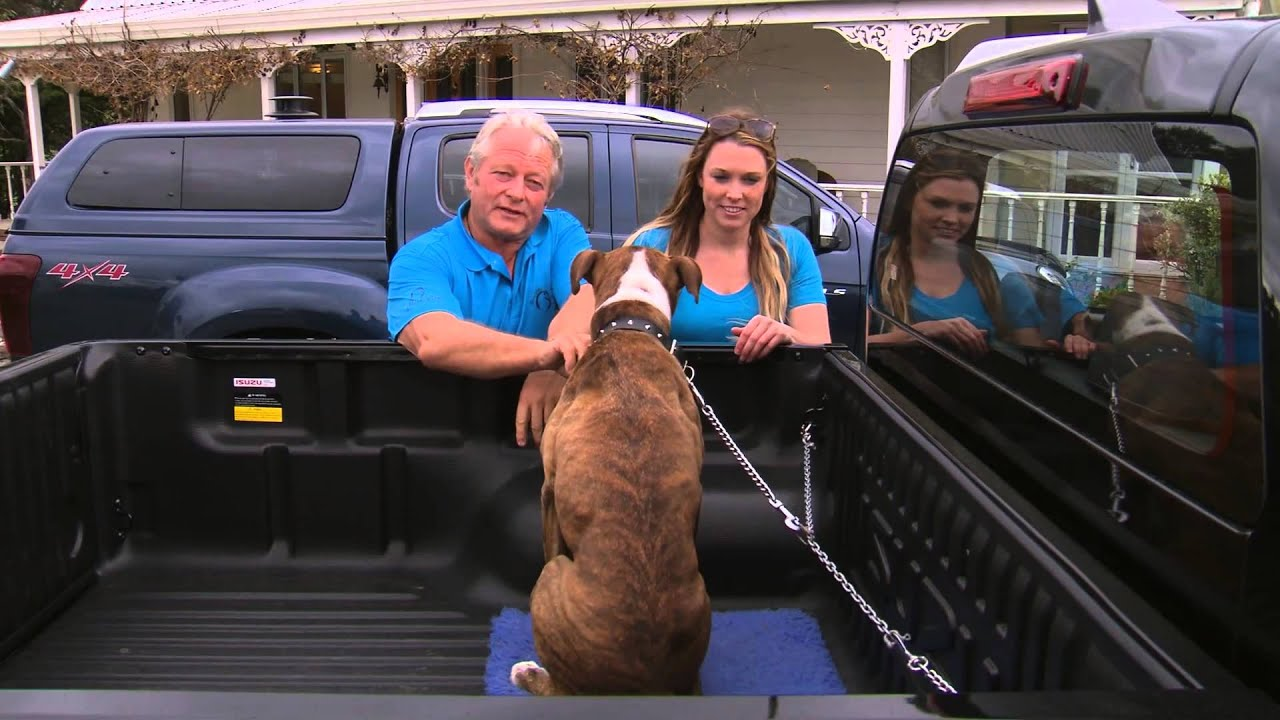 How to Travel Safely With Your Dog