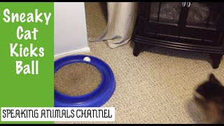 Sneaky Cat Flicks Ball With Paw & Continues Walking | Funny Cat Video