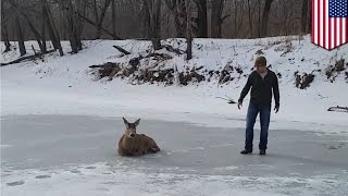 Buck rescue: family saves deer stuck on frozen lake in Indiana