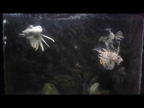 Amazon river fish