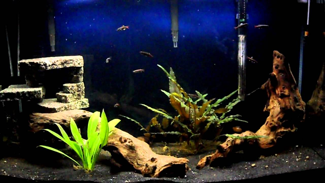 30 Gallon Planted Fish Tank-White Cloud Mountain Minnows - YouTube