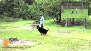 Naples Florida Off-leash Dog Training Boarding Camp - Roxy The Rottweiler/german Shepherd Mix Dog