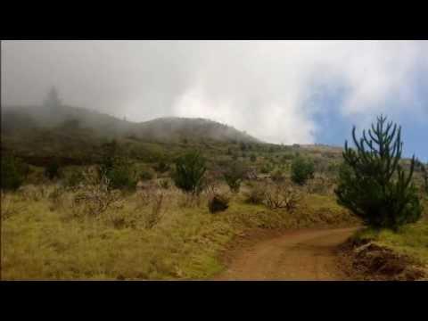 Polipoli Forest Preserve to Haleakala Summit and Return via Skyline and Mamane Trail.