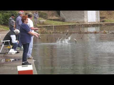 Stocking Fish In Fountain City Lake