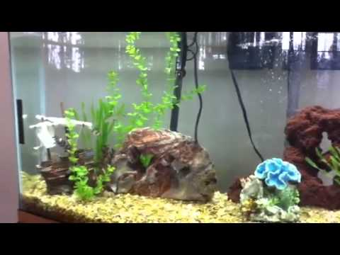 My 50 gallon fish tank youtube for 50 gallon fish tank