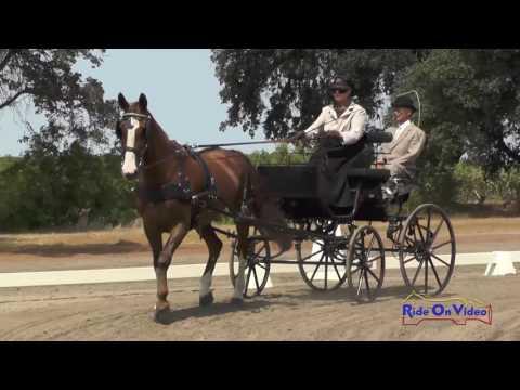 031D Melinda Takeuchi Preliminary Single Horse Dressage Sargent Equestrian CDE Aug. 2016