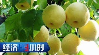 《经济半小时》 20190606 梨价上涨的背后| CCTV财经