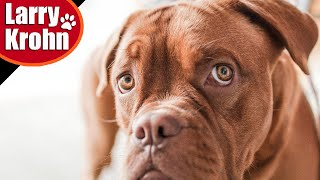 Abusive dog training must stop