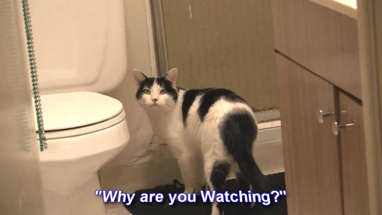 Mr Jingles The Showering Cat Youtube
