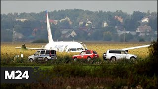 Экипаж A321 сумел посадить самолет в кукурузном поле с двумя поврежденными двигателями - Москва 24